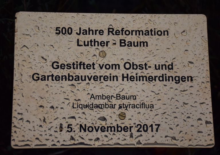 Pflanzung Luther-Baum 2017